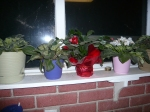 This is for Jodi.  My Christmas Cactus finally bloomed after a year.  Lucky it thrives on neglect.